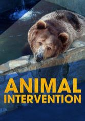 Animal Intervention
